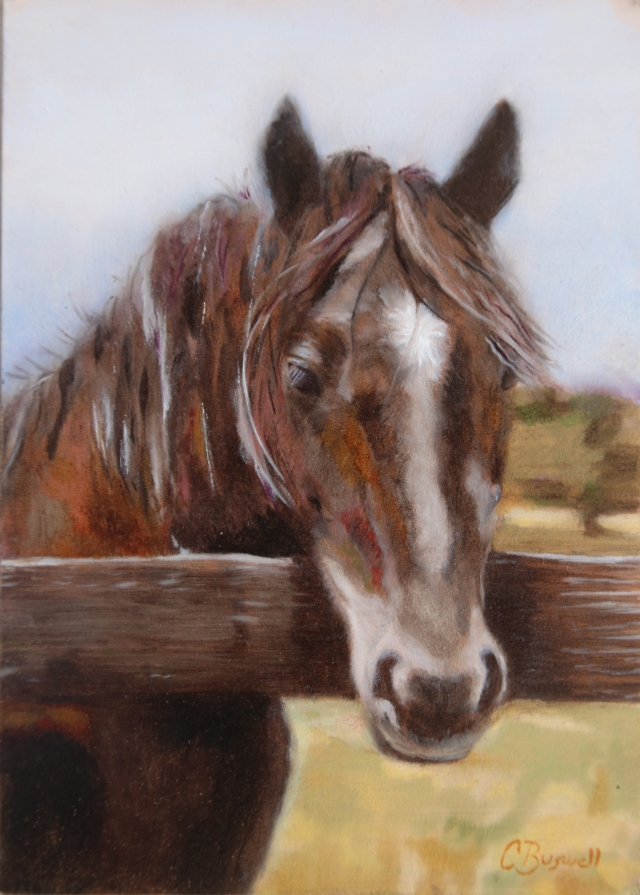 Black Beauty at Ballina Farm, 5 x 7 inches, oil on panel. SOLD